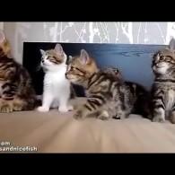 可爱:5只小猫整齐随音乐摆头跳舞