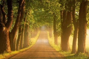 唯美英语:Happiness is a journey/幸福是个过程