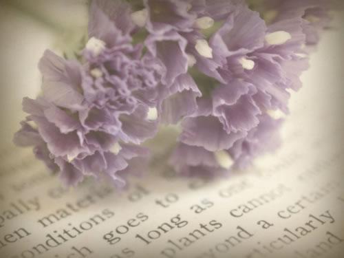 唯美英语:Virtue/美德