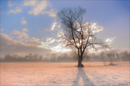 唯美:来生,要做一棵树