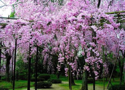 唯美治愈:一处花开,一抹闻香