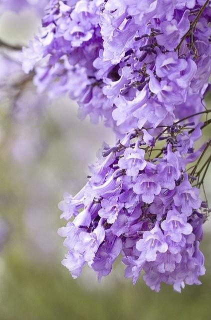 唯美治愈:静看花开