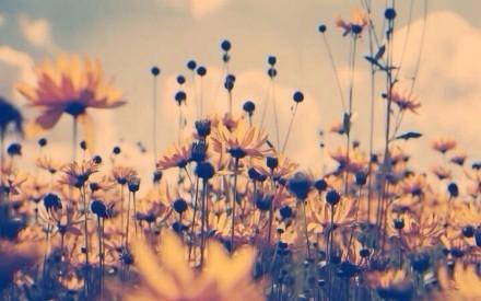 唯美治愈:闲看花开,静待花落